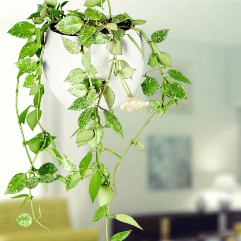 bathic-5 plants air purify